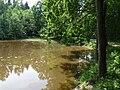 Borovnice (ČB) - rybník Šanderák.jpg