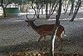 Borujerd Zoo 1.jpg