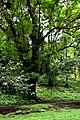 Botanic garden limbe78.jpg