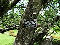 Botanical Garden of Peradeniya 37.JPG