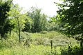 Bottom at the bottom of Black Dog Hill - geograph.org.uk - 1420608.jpg