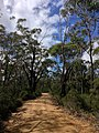 Braeside Trail - panoramio (2).jpg