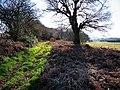 Bridleway northeast of Carrols - geograph.org.uk - 1097291.jpg