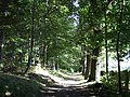 Bridleway to Crathes Castle - geograph.org.uk - 572235.jpg