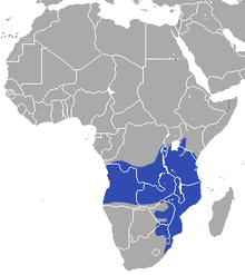 Brown greater galago range
