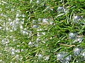 Bubbles on the Grass - Flickr - dave 7.jpg