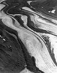 Buckskin Glacier, bands of rock covering valley glacier, August 9, 1957 (GLACIERS 7165).jpg