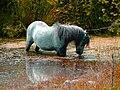 Bull bay farm glasfryn.jpg