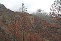 Burnt Forest 3 (2278899427).jpg