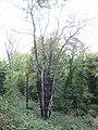 Burnt tree and telegraph pole, near Hempstead - geograph.org.uk - 2111928.jpg