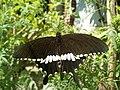 Butterfly on.jpg