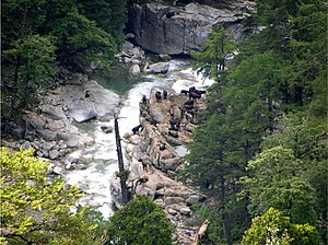 Three Parallel Rivers - A herd of takin in Gongshan Derung and Nu Autonomous County