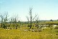 CSIRO ScienceImage 1746 Salinity affected area.jpg