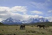 Caballos ante los Cuernos del Paine, Parque Nacional Torres del Paine, Chile1.jpg