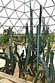 Cactaceae in Suan Luang Rama 9 Photographed by Trisorn Triboon (32).jpg
