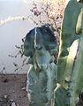 Cactus damage (6077349090).jpg