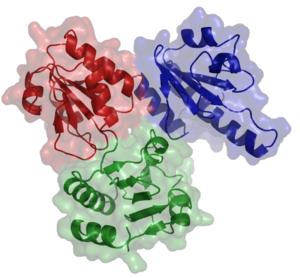 Calsequestrin - Image: Calsequestrin 1