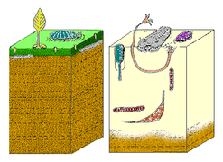 The Cambrian substrate revolution saw life on the sea floor change from minimal burrowing (left) to a diverse burrowing fauna (right), probably to avoid new Cambrian predators.