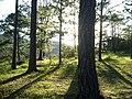Camping - panoramio (14).jpg