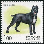 Cane-Corso-Canis-lupus-familiaris Russia 2002.jpg