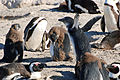 Cape Town 2012 05 16 0114 (7179927939).jpg