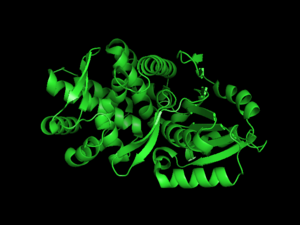 3-dehydroquinate synthase - This cartoon representation of 3-dehydroquinate synthase shows the arrangement of the secondary structure of the protein