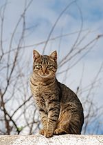 Cat November 2010-1.jpg
