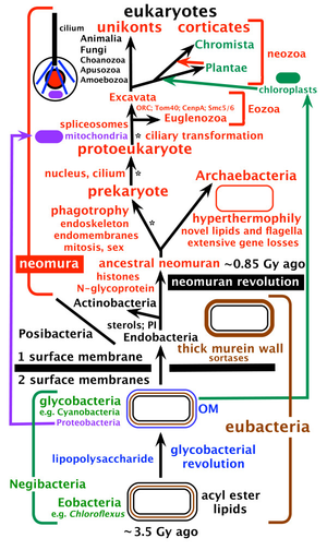 Thomas Cavalier-Smith - Tree of life and major steps in cell evolution after Cavalier-Smith, ca 2010, before his 2015 revision