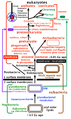 Cavalier-Smith - The tree of life and major steps in cell evolution.png