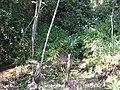 Caxinha - usina ester, Cosmópolis - SP. - panoramio (2).jpg