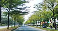 Cay xanh, tren duong Nguyen van Linh q7 tphcmvn - panoramio.jpg