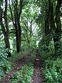 Cesta mezi Boňkovským rybníkem a rybníkem U Dubu (2).jpg
