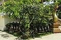 Chiang Rai - Wat Doi Ngam Mueang - 0008.jpg