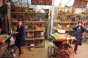 Influenza A virus subtype H7N9 - Live poultry market in Xining, China.
