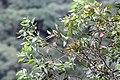 Chinnar Wildlife Sanctuary IMG 9072 (23).JPG