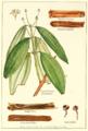 Cinnamon-cassia.png