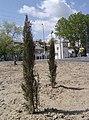 Cipreses - panoramio.jpg
