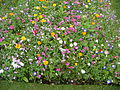 Close-up of wild flowers (7592663452).jpg