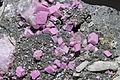 Cobaltodolomite, cobaltocalcite, quartz.jpeg