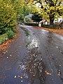 Cockington Lane - geograph.org.uk - 1561634.jpg