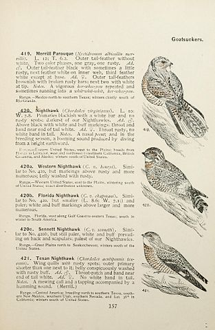 313px Color key to North American birds Page 157 BHL