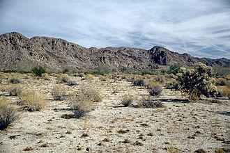 Colorado Desert - Colorado Desert landscape