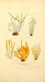 Coloured Figures of English Fungi or Mushrooms - t. 253.png
