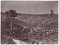 Confederate Prisoners at Belle Plain, May 12 MET DP70634.jpg