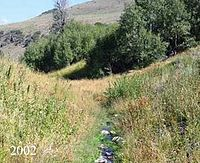 The same stream bank lined with higher grasses that obscure most of the water, with a thicker aspen grove behind