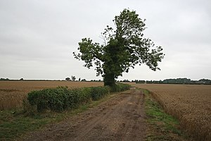 Wothorpe - The county boundary near Racecourse road
