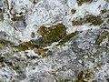 Cova d'en Marc P1070431.JPG