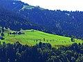 Cows - panoramio (10).jpg