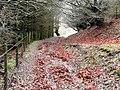 Craig y Glyn forest - geograph.org.uk - 653089.jpg