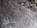 Crinoid P8130003.jpg